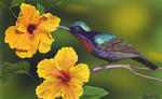 Hibiscus and Sunbird by Cozmia
