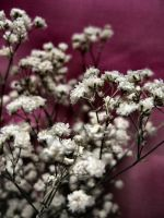 little pink e white flowers by erykucciola-sToCk