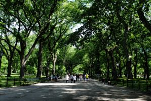 The Mall, Central Park by Kellyx96