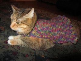 Rainbow Crochet Cat Sweater by SharpieObsessed