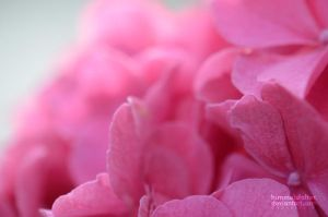 Pink Dream by Himmelsfalter