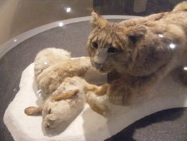 Halifax History Museum - Hare and Lynx by tobysq