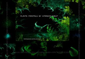 Plants fractals by STARSCOLDNIGHT by StarsColdNight