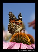 Butterfly And Sky II by andy-j-s