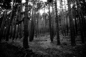 Forest by manuelvicioso