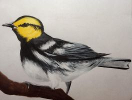 Golden Cheeked Warbler by Ginjersnapps