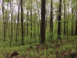 Green Forest by Ahopper1996