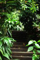 Jungle stairs by Safraba
