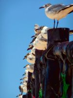 Seagulls 2 by Seigner