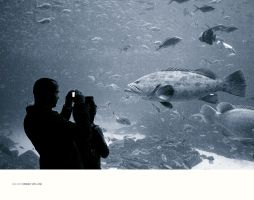 Interview With A Fish by seenew
