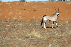 Auob Country Lodge, Namibia 15 by ElSpaZo