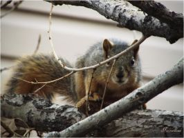 squirrel-serial-2 Well where are you? by sonafoitova