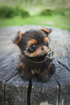 Yorkshire Terrier puppy by Irentoys