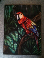 Parrot by Smileyface102g