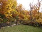 Autumn Forest Landscape 12 by FantasyStock