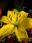 Banana lily by THEsimplePLEASURES