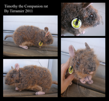 Timothy the companion rat by Tirramirr