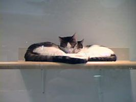 A Shelf Made For Two? by Denna