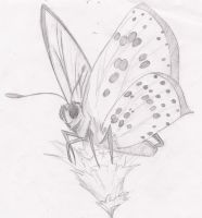sketch of a butterfly by Gothic-Enchantress