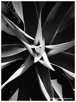 Alien by TheEternalSpectator