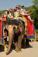 Elephant riding 1 - Rajasthan by wildplaces