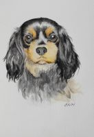 Watercolour Cavalier King Charles by lazydaysart