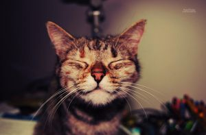 Happy Cat is Happy by AnaRosaPhotography