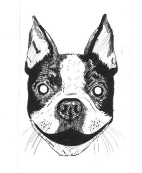 Boston Terrier by LIVE999