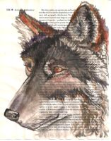 Wolf on Ecology Page506 by vanahowell