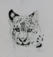 Snow Leopard by PadfootBrush