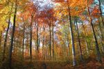 herbstwald by snow-covered-dreams