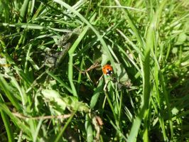 Ladybird in the grass by OffSkyline
