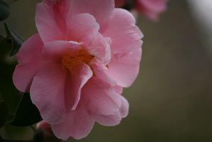 view to camellia 3 by ingeline-art