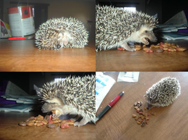 Tobi the hedgehog eats catfood by luci-filth