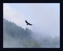 Eagle In The Clouds by swashbuckler