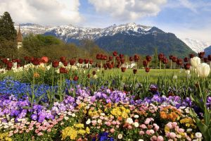 Flower Bed by Justin-Simpson