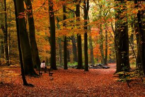 Naarden Forest by Zefisheye