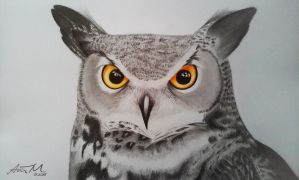 Great Horned Owl by angelsky7