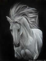 Shadowfax by Niarbon