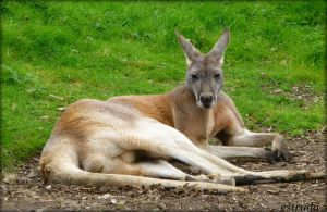 MR Roo by Estruda