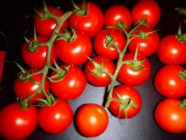 Tomatoes by TheFlyingHeart