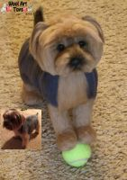 Rosie Needle felted Yorkshire Terrier by WoolArtToys