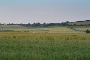 Meadow Pasture Landscape 10 by LuDa-Stock