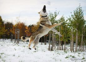 Wolfdogs Can Fly IX. by Czertice