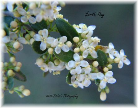 Earth Day 2010 by kat1967