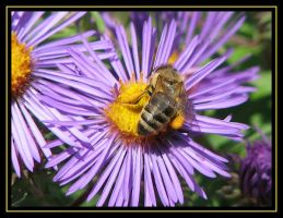 Pollinator by picworth1000wrds