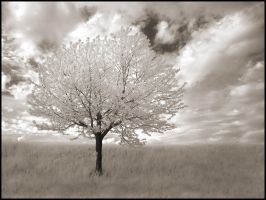 White Tree IR... by MichiLauke