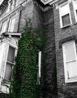 Abandoned_Ivy by bkueppers