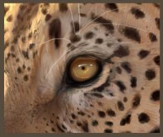Glimpse into the Soul Leopard by Psychopomp16