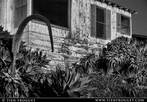 Old Building in Black and White by tienlove